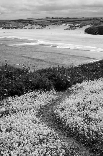 The Beach Path Beauty In Nature Scenics - Nature Tranquil Scene Nature Tranquility Landscape Cloud - Sky Water Day No People Land Sky Sea Beach Plant Flowers Blackandwhite Black And White