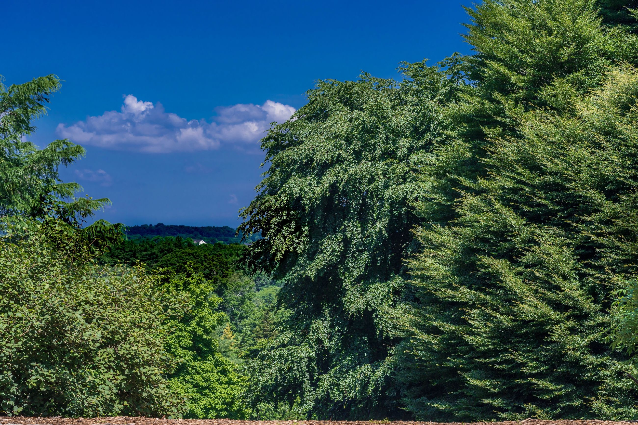 plant, tree, sky, beauty in nature, green color, tranquility, tranquil scene, growth, scenics - nature, non-urban scene, nature, blue, no people, day, cloud - sky, land, forest, outdoors, idyllic, lush foliage, coniferous tree