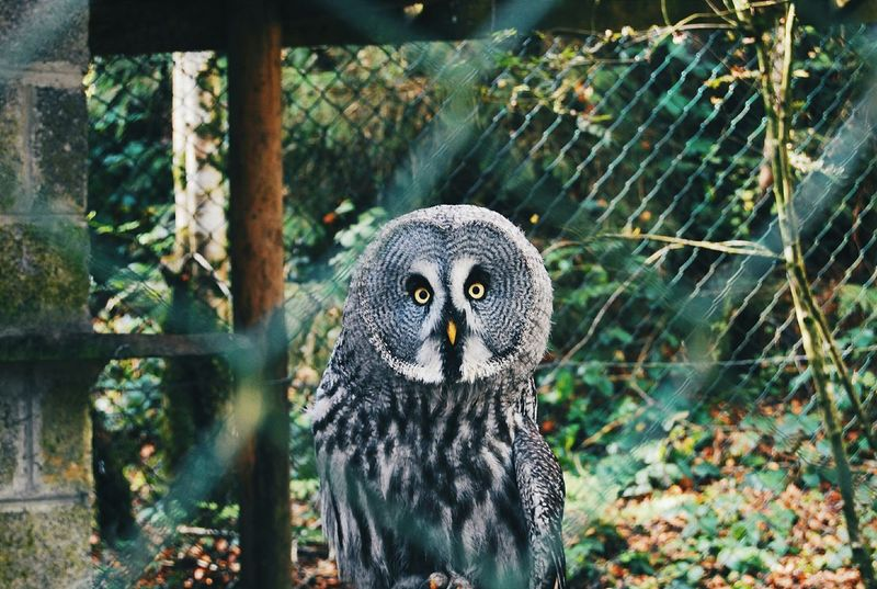Owl Eagleowl Nature Zoo Animals  Cage Summer ☀ Killarney  Ireland🍀 Taking Photos Vscocam