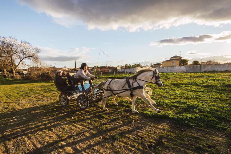 Men riding horse cart against sky