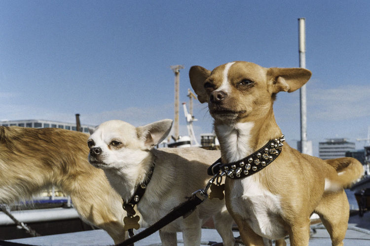 Close-Up Of Dogs With Pet Leash Against Sky