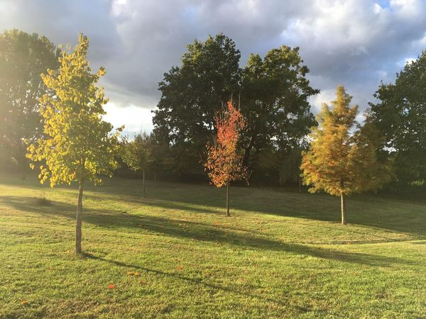 Tree Nature Beauty In Nature Autumn Grass Landscape Green Color Outdoors No People Day Allrightnow Iphonese Nofilter Silent Moment
