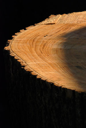 Black Background Circular Pattern Close-up Concentric Eye4photography  EyeEm Nature Lover EyeEmBestPics Natural Pattern Nature Night No People Outdoors Patterns And Textures Patterns In Nature Patterns In Wood Rough Rough Texture Sawn Trees Shadows & Lights Tranquil Scene Tree Tree Ring Tree Trunk Treetrunk Wood