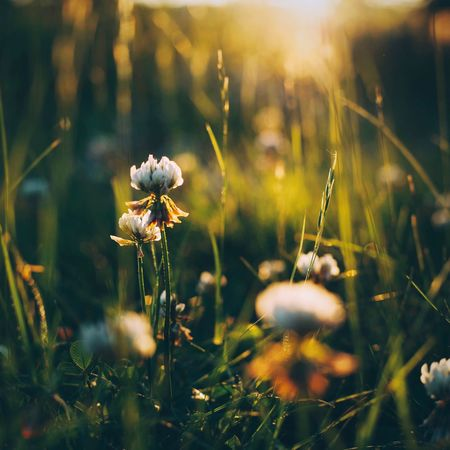 That special light. Nature Nature Photography Details Flowers Magic Hour Light Eyeemphoto