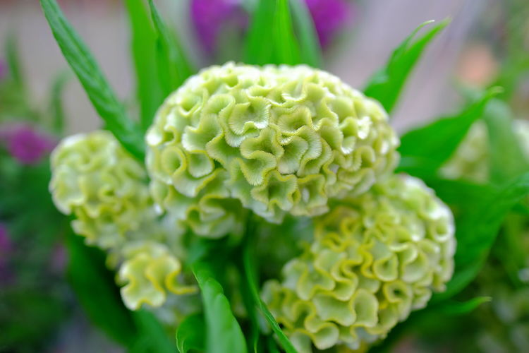 Close-up of green flowering plant