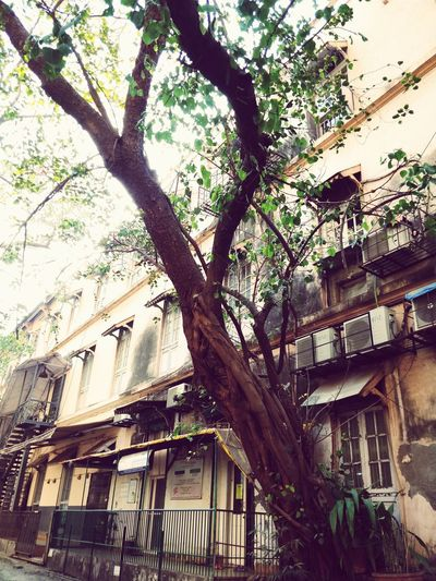 Low angle view of tree in city