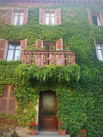 Architecture Green Color Building Exterior Built Structure Ivy Plant Growth Day Tree No People Outdoors Flower Old Door Old House Langhe Italy Alta Langa Textures And Surfaces
