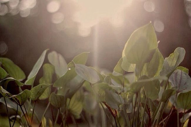 Good Morning ! Nature Growth Plant Leaf No People Day Outdoors Beauty In Nature Green Color Close-up Freshness Water Jakarta As I See It Indonesia_allshots Mobilephotography Nature Morning Light Sunlight Urban Landscape Exploring New Ground Daily Life See The Light