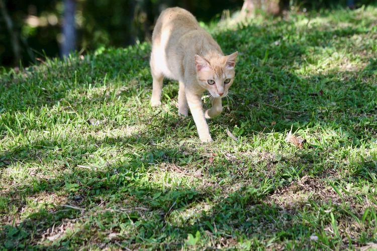 My cat walking