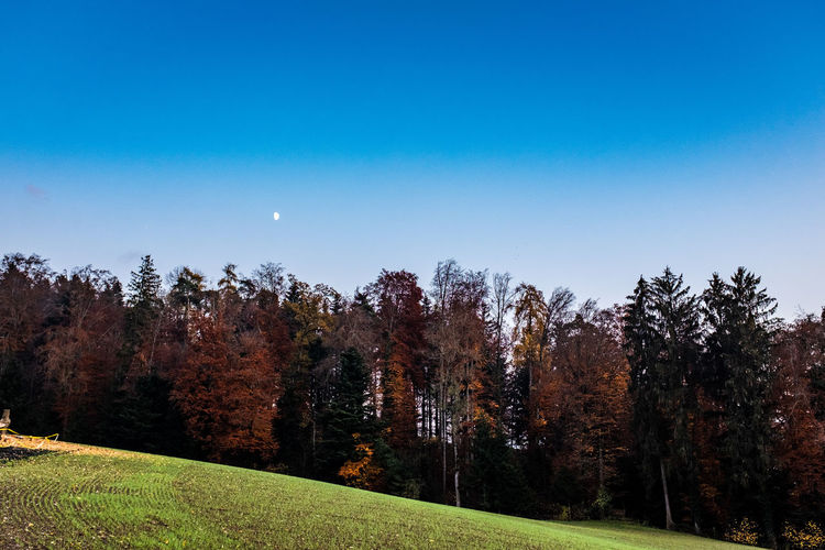 Tree Plant Sky Beauty In Nature Scenics - Nature Tranquility Tranquil Scene Autumn Land Nature Growth Field No People Grass Environment Moon Landscape Idyllic Change Non-urban Scene Outdoors