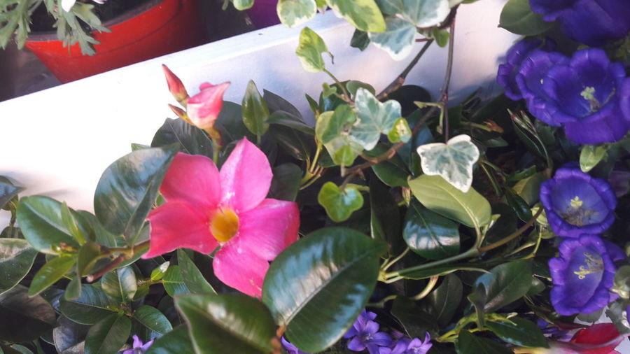 Plant Leaf Flower Beauty In Nature Flower Head