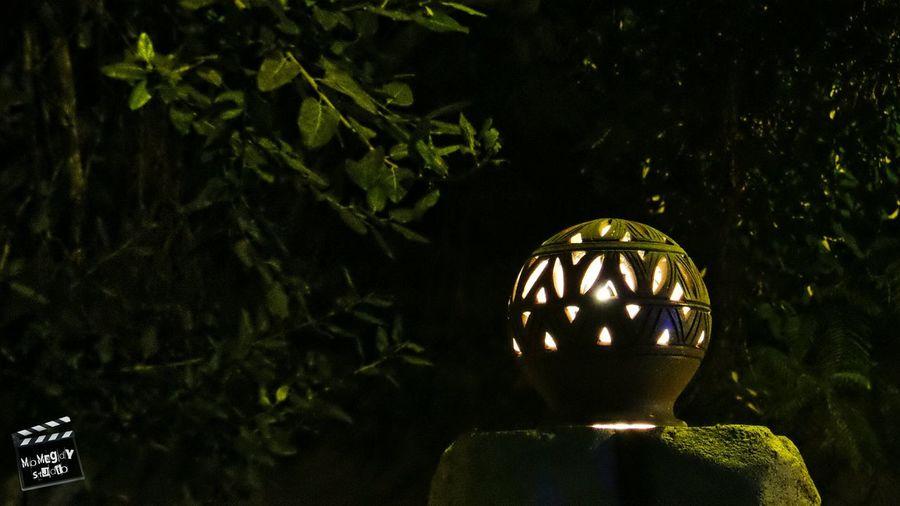Lantern Pillar Trees Light Green Leafs Branches Night This Is Egypt MoMagdyStudio