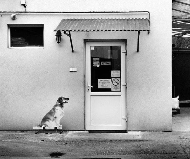 Building Door Shop Street Fake Dog Waiting Strange Funny Hungary Békéscsaba Blackandwhite Bnw_captures Bnwhungary Art Mood Autumn
