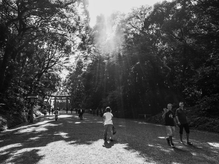 Meiji-Jingu Shinto Shrine Sunshine Blackandwhite Tokyo,Japan Japan Meijishrine Meiji Shrine Meiji Jingu Meijijingu Black And White Collection  Blackandwhitephotography Black And White Photography Black&white Blackandwhite Photography Black & White Black Black And White Shinto Shintoshrine Harajuku Tokyo Japanese Photography Japan Photography Japan Photos