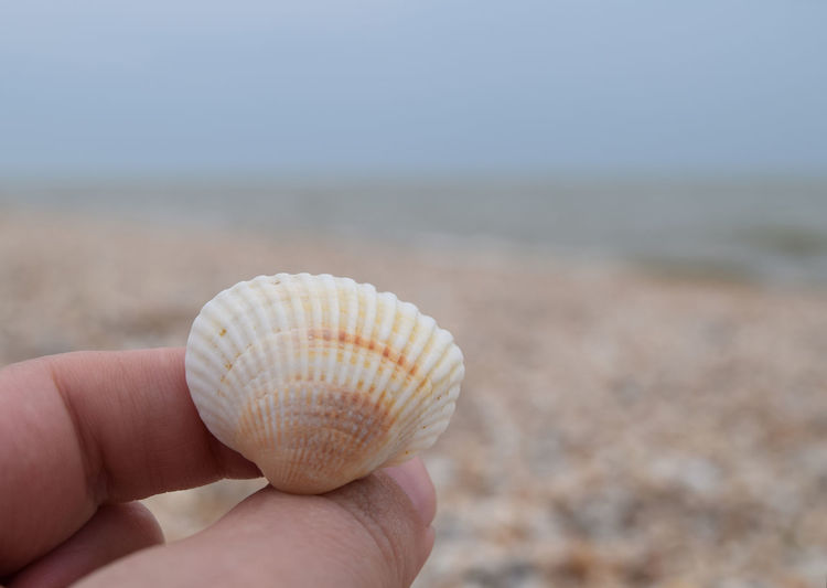 Macro Photography Seascape Photography Seashore Animal Shell Animal Wildlife Azovsea Beach Body Part Close-up Day Finger Focus On Foreground Hand Holding Human Body Part Human Hand Land Nature One Person Outdoors Real People Sand Sea Seashell Shell