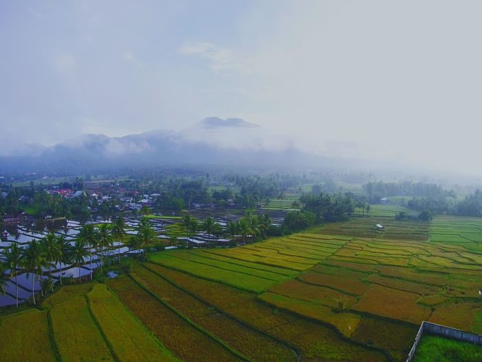 another view of mt. Ambang DJI X Eyeem EyeEm Best Shots EyeEmNewHere EyeEm Selects Dronephotography Cloud - Sky Midrone Agriculture Rural Scene Field Farm Landscape Nature Outdoors Hill No People Shades Of Winter An Eye For Travel