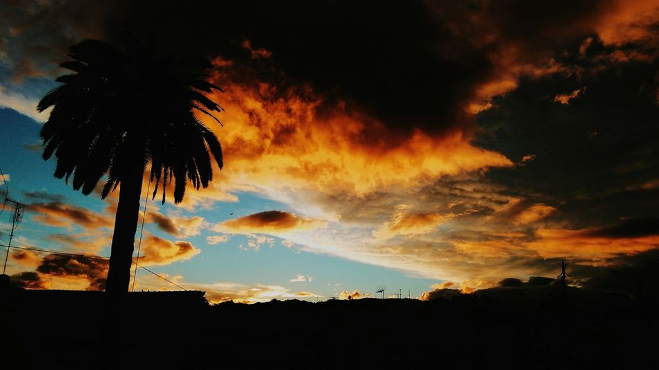 Tree Sunset Sky Cloud - Sky Palm Tree Nature No People Dramatic Sky Beauty In Nature Outdoors