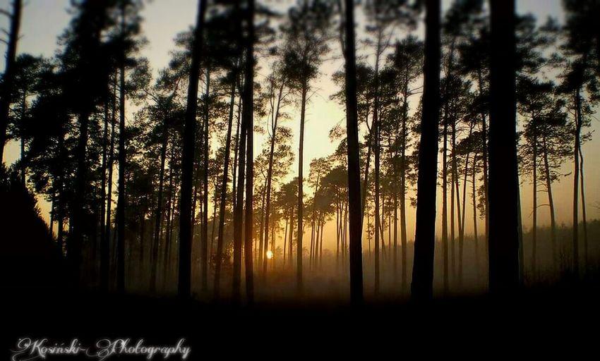 Tree_magic