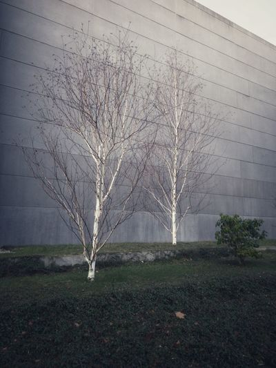 Brutalist Architecture City Wall Plant Tree Nature No People Beauty In Nature Field Day Tranquility Environment Bare Tree The Architect - 2019 EyeEm Awards