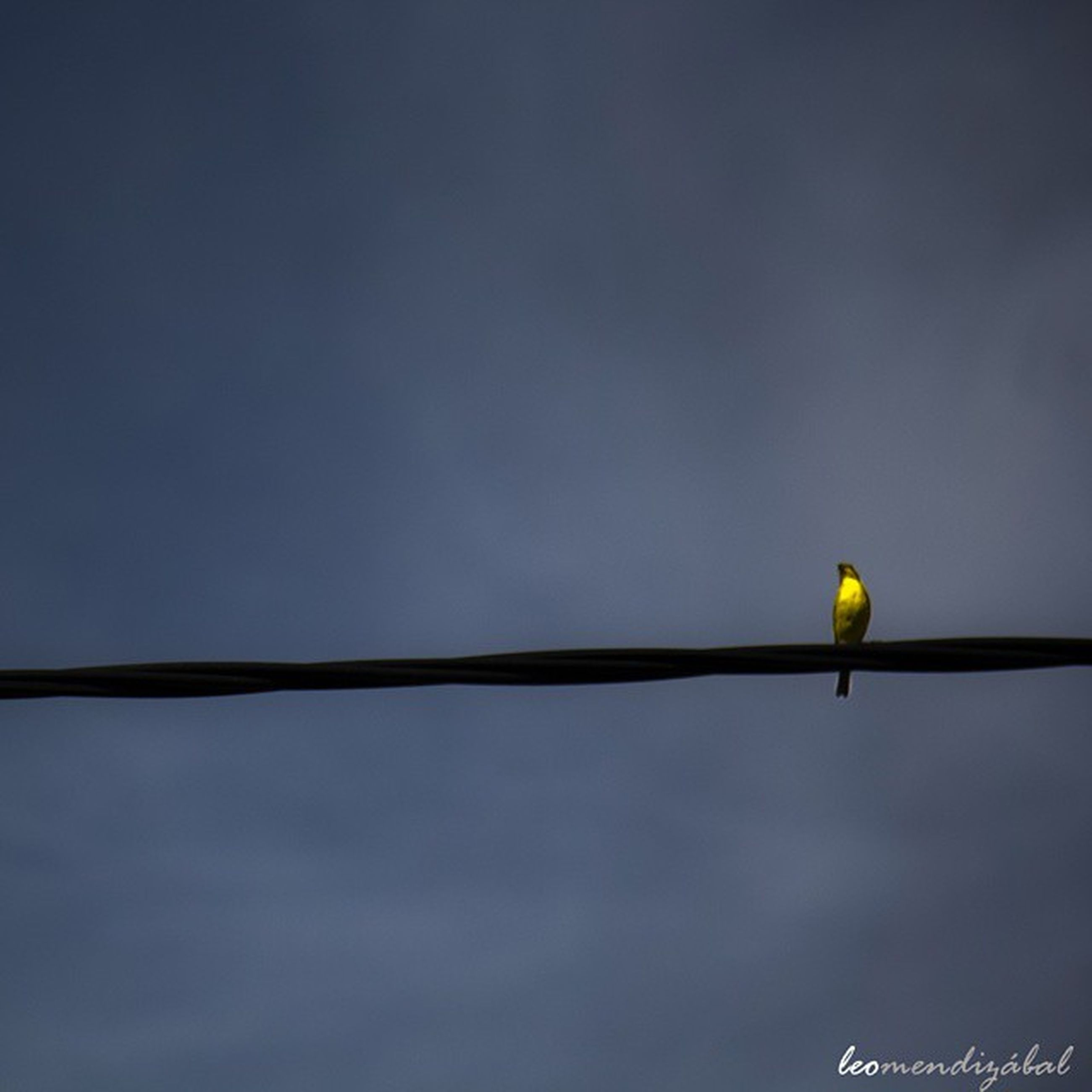 low angle view, street light, lighting equipment, sky, copy space, bird, dusk, illuminated, nature, pole, outdoors, no people, yellow, safety, perching, clear sky, tranquility, electricity, protection, high section