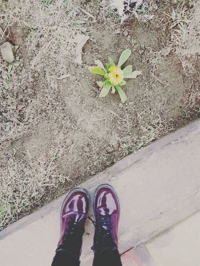 First Eyeem Photo Love Shoes Flowers Fashion Fun Friends Colors Me Yellow Flower Samsung Galaxy S7 Edge
