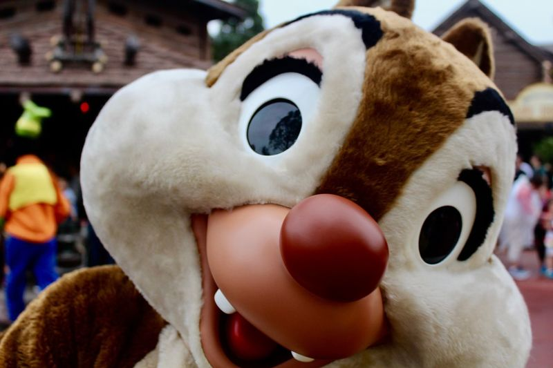 Vacation Magic DisneyWorld Disney Costume Toy Focus On Foreground Animal Representation Stuffed Toy Close-up Indoors  Childhood Day One Person Real People People EyeEmNewHere