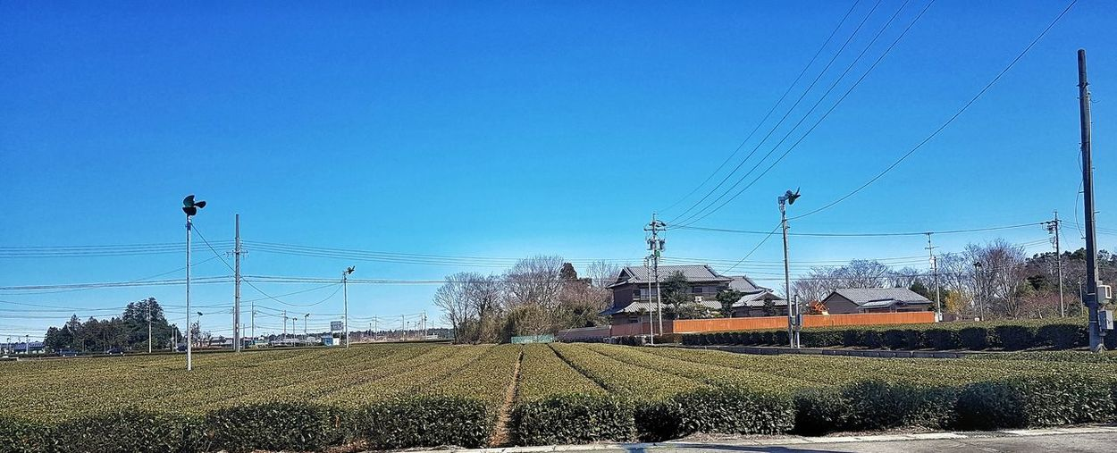The Greentea farm Agriculture Japan Green Tea Farm Bird Flying Clear Sky Sky