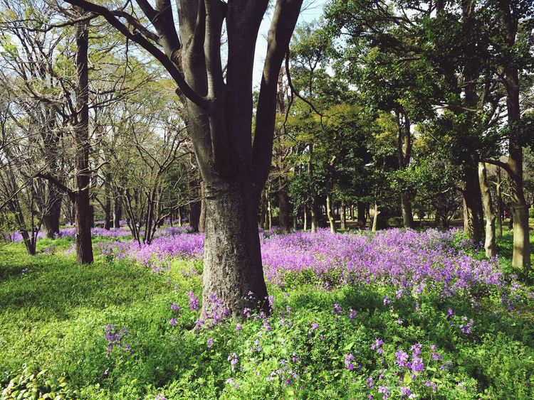 Purple meadow. Check This Out Purple Purple Flower Nature Flowers Tadaa Community Urban Spring Fever Spring Discover Your City Travel Travelling Pastel Power
