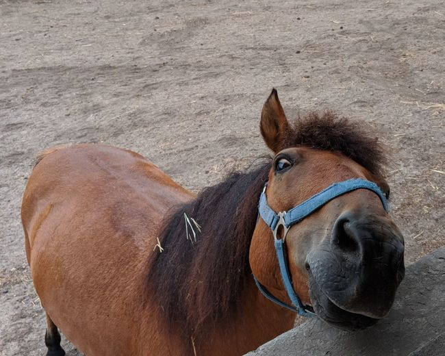 Hey✌ FUNNY ANIMALS Funny Faces Funny Moments Funny Brown Horse Close-up Livestock Animal Body Part Working Animal