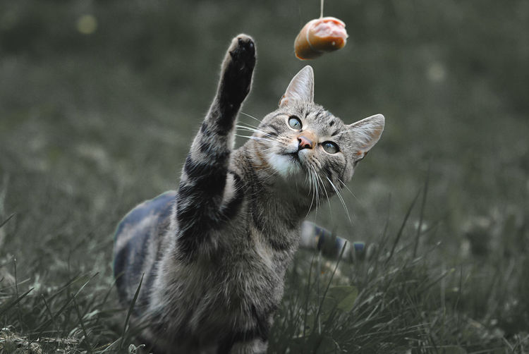 Cat Playing On Field