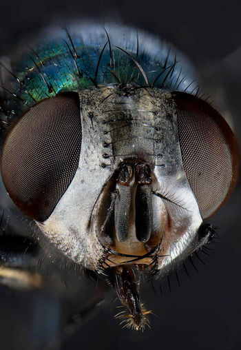 Close-up Animal