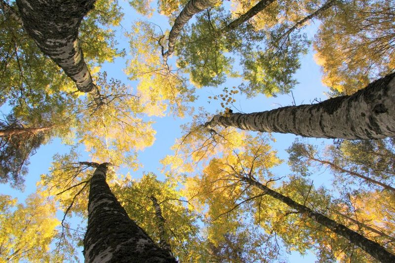 Look up a tree. LookUpATree EyeEm Best Shots EyeEm Nature Lover Trees