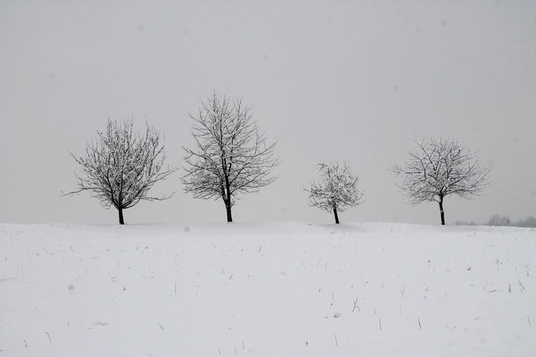 Winter Bare Tree Beauty In Nature Branch Cold Temperature Day Landscape Nature No People Outdoors Scenics Sky Snow Tranquil Scene Tranquility Tree Trees And Nature Trees In Winter White Background Winter Winter Trees