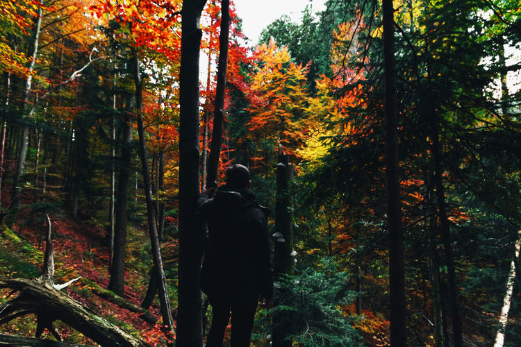 Rear view of man amidst trees in forest during autumn