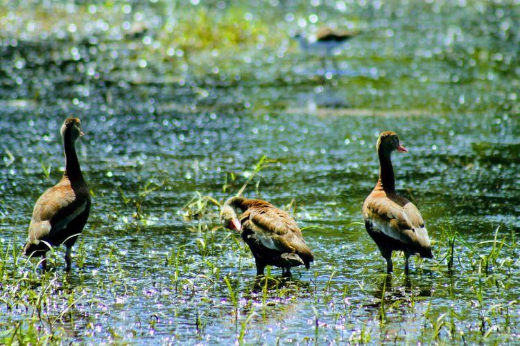paz EyeEm Best Shots EyeEm Nature Lover Bird Water Young Animal Young Bird Lake Animal Themes Animal Family Water Bird
