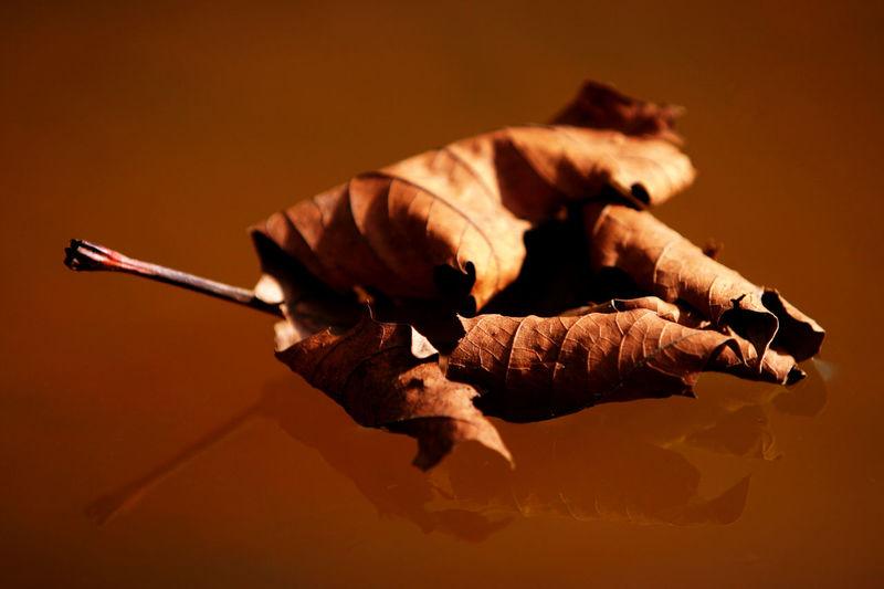 Fall Close-up