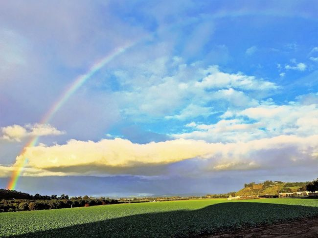 A beautiful rainbow appears through puffy clouds on a blue sky after the rain. After The Rain Agriculture Beauty In Nature Blue Sky Cloud - Sky Day Dramatic Sky Field Fields Grass Green Fields Landscape Landscapes Nature No People Outdoors Rainbow Rainbow Sky Rainbows Rainbows Sky Clouds Rural Scene Scenics Sky Tranquil Scene Tranquility