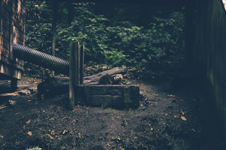 Abandoned Countryside Damaged Day Dirt Growth Messy No People Non-urban Scene Obsolete Outdoors Plant Tall Tranquility Tree Woods