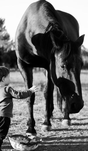 Boy Standing By Horse On Field