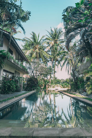 Bali Bali, Indonesia Architecture Beauty In Nature Building Exterior Clear Sky Day Growth Nature No People Outdoors Palm Tree Paradise Pool Reflection Sky Swimming Pool Tree Water