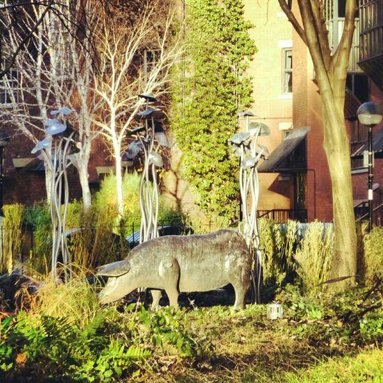 Summer Garden Art Pig In The City