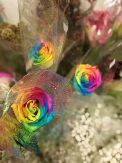Rainbow Roses Flower Floral Florist Roses Rainbow Colors RainbowRose Multi Colored Flower Celebration Rainbow Outdoors No People Fragility Day Nature Close-up