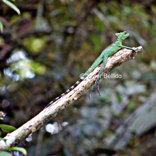 La zona de Tortugero en la costa de Costa Rica contiene fauna, y una vegetación increíble con una gran diversidad de colores. Travelling Travel Photography Viaje A Costa Rica Fotografia De Viaje