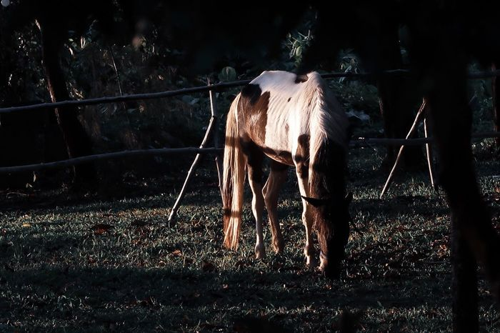 Horse at sunsets Animal In Natural Habitat Animal In Nature Nature Animal Nofilter Raw Shadow Highlights Highlight And Shadow Silhouette Sunsets Horse Outdoors Field Illuminated First Eyeem Photo