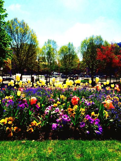 Bonne fête du travail 🐣🍀 Hanging Out Taking Photos Enjoying Life Parc Green Vert Spring Printemps Paris Flowerporn Flowers Flowers,Plants & Garden Flower Photography Flower Power Fleurs Colors Couleurs