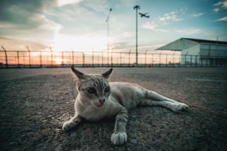 Pets Cat Sky