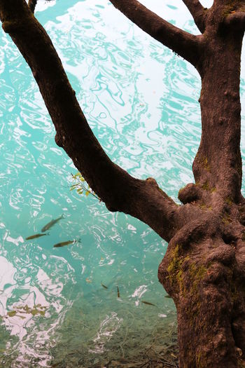 Close-up of tree trunk in lake