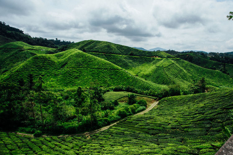 Agriculture Beauty In Nature Cloud - Sky Field Green Color Landscape Nature No People Outdoors Rural Scene Scenics Sky Tea Crop Terraced Field Tranquil Scene Tranquility Tree