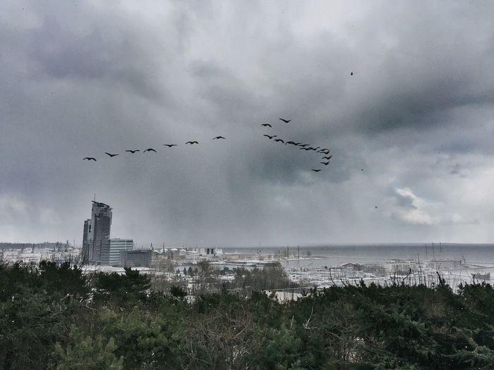 Bird flying over cloudy sky