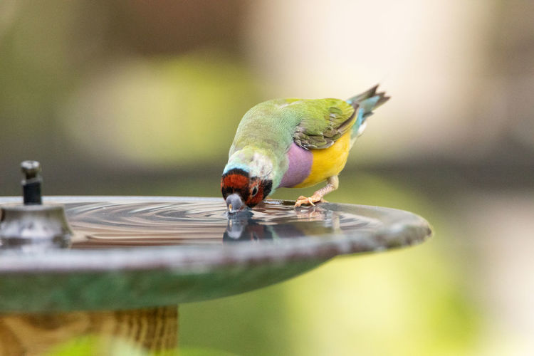 Side view of bird perching on a feeder